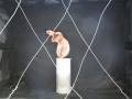 UNE SALLE POUR CETTE OEUVRE (11) [1600x1200]